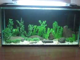 20 gallon aquarium decoration ideas 1000 aquarium ideas 1000