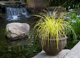 sedges for containers shannon currey pulse linkedin