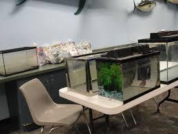 bas event u2013 u201csetting up a fish room u201d by larry jinks april 13