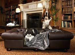Leather Sofa And Dogs Best For Dogs Or Impressive Pets And Leather
