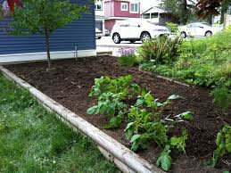 planning vegetable garden layout backyard 50 small backyard vegetable garden designing