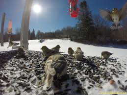 finches with cool gopro photos in vermont vagabond way