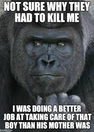 Gorilla Meme - handsome gorilla meme generator imgflip