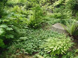 native plant nursery oregon plants cool woodbrook native plant nursery woodbrook native