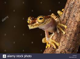 Small Tiny Animal Amphibian Night Nighttime Eyes Small Tiny Little