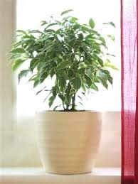indoor plants that need no light best low light indoor plants low lights plants and dark houseplants