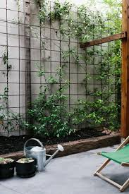 trellis reo mesh used for climbing plants pinned to garden
