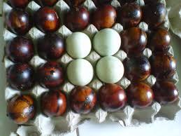 membuat telur asin berkualitas jual telur asin asap