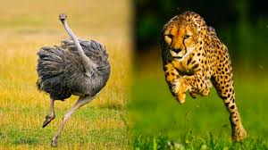 top 10 ridiculously fast animals youtube