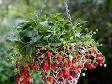how to make a strawberry tower hgtv