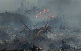forest fires stoke record loss in world tree cover scientific