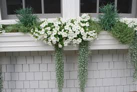 Container Gardening Flowers White Flowers Dirt Simple