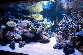 Live Rock Aquascaping Nice Aquascape Reef Tank 110g Reef Tank Pinterest Nice