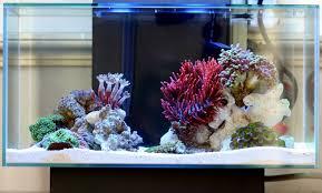 fluval edge marine light saltwater fluval edge marine nano reef pictures interview