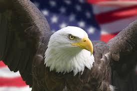 America Eagle Meme - list of synonyms and antonyms of the word happy birthday america eagle