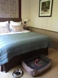 chambre pour chien accueil pour chien en chambre picture of hotel le pigonnet