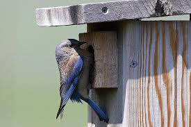Building A House Plans Free Plans For Building A Bluebird House