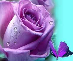 Lavender Roses 18 Best Lavender Roses Images On Pinterest Lavender Roses