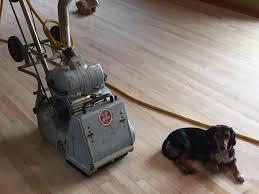 dog and hardwood floors stairfaces and josephsen hardwood floors home facebook