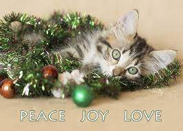 cats and christmas trees kelly richardson