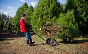 christmas sloan nursery christmas trees tree farms near me