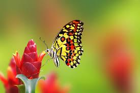 wallpaper butterfly flowers 4k animals 14986