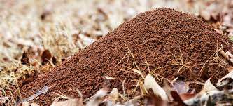 how to help get rid of ant hills in your yard terminix