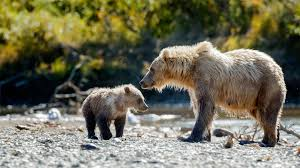 when to go to canada best time to visit canada natural world