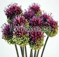 burgundy flowers burgundy chocolate wedding flowers for sale