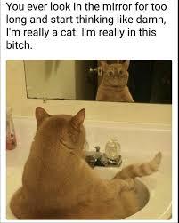 Random Cat Meme - 40 random memes that will totally destroy your boredom memebase