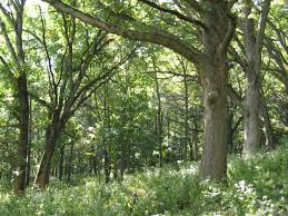 Iowa forest images Practical biology science for everyone looking into midwestern JPG