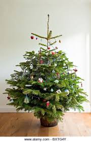 Decorated Christmas Tree Delivery Uk by Real Christmas Tree Stock Photos U0026 Real Christmas Tree Stock