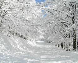 1280x1024 thick snow trees u0026 pretty path desktop pc and mac wallpaper