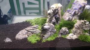 Aquascape Led Lighting Lovely Aquascape Aquarium With Cardinals And Fluval Led Lights