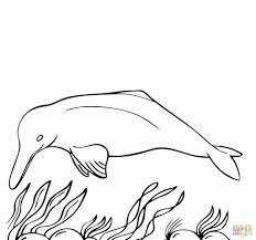 animal baby coloring pages halloween coloring pages horse