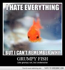 Funny Fish Memes - fish memes funny fish pictures memey com clip art library