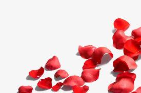 Rose Petals Rose Petal Rose Petal Png Image For Free Download