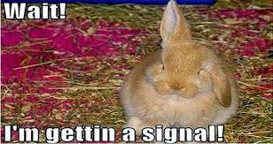 Funny Rabbit Memes - i can has cheezburger rabbit memes funny animals online