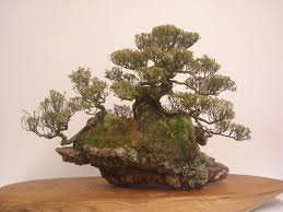 compare prices on bonsai rock garden online shoppingbuy low ideas