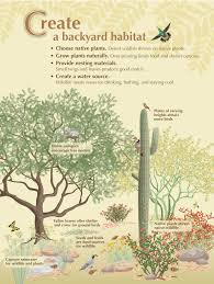 Backyard Habitat 4 Easy Ways To Attract Wildlife To Your Yard Water Use It Wisely