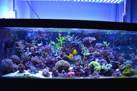 led reef aquarium lighting reef aquarium under atlantik v4 led lighting orphek