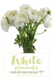 wedding flowers names the 25 best white flowers names ideas on wedding