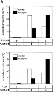 ii chain controls the transport of major histocompatibility