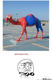 Camel Memes - spider camel by filamnder meme center