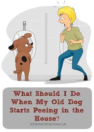 Dog Peed On Bed What Should I Do When My Old Dog Starts In The House