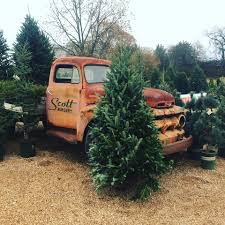 christmas tree farms in tennessee nashville interiors magazine