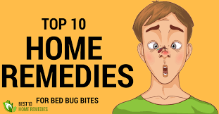 Bed Bug Home Remedies Home Remedies For Bed Bug Bites