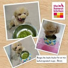 Honest Kitchen Dog Food Reviews by The Honest Kitchen Pet Food Treats U0026 Supplements Kohepets Singapore