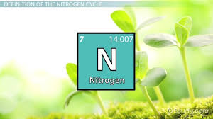 the nitrogen cycle definition facts u0026 steps video u0026 lesson