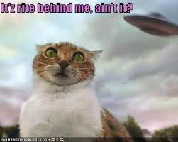 Cat Alien Meme - world ufo day meme ufo best of the funny meme